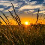 Stymulatory wzrostu upraw w rolnictwie